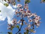Zasadź drzewa Oxytree